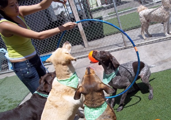 pet day care in honolulu, hawaii, pet friendly care in waikiki